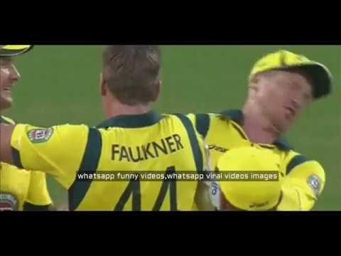 cricket excessive 5 fail humorous clip