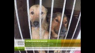 Зоозащитники округа ждут вступления в силу закона о защите животных
