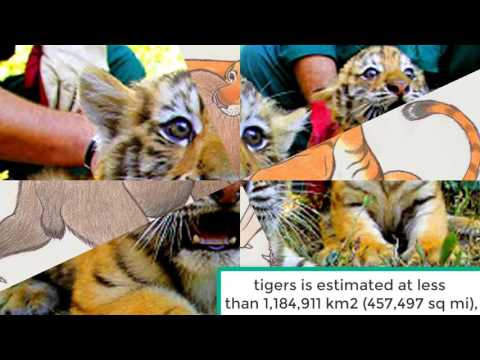 Caspian Tiger Extinction and Facts About Caspian Tigers