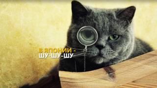 Как называют кошек в разных странах мира?