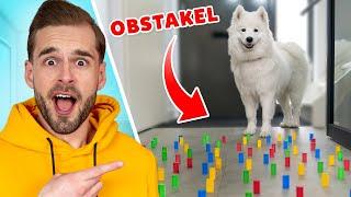 Paco De Hond Reageert Op Obstakels! *Challenge*