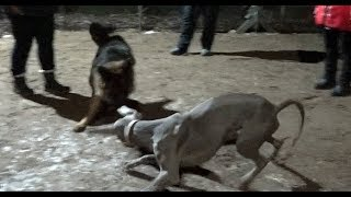 Территориальная агрессия выяснение отношений Коррекция с помощью собаки