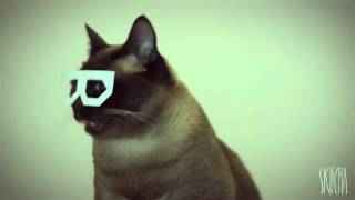 DUBSTEP HIPSTER CAT ~ Stereo Skifcha ORIGINAL UKF【HD】