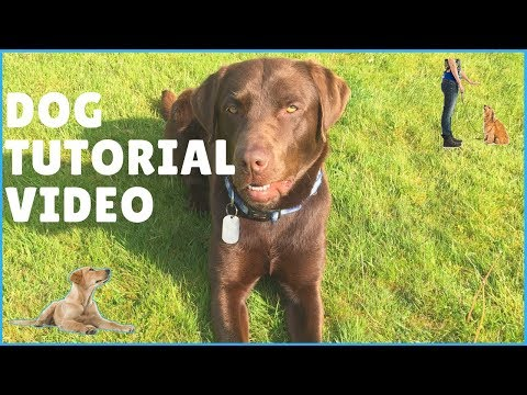 Dog Tutorial | Approaching, Training, Tips & Facts