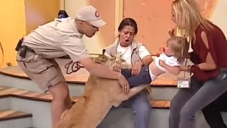 See Horrifying Moment A Lion Cub Tried To Snatch Screaming Toddler Live on TV