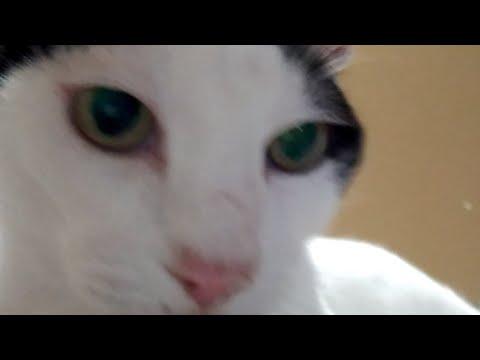 お布団の上の猫LIVE配信 200912