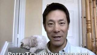 Puppy House Training With Litter Box For Dogs