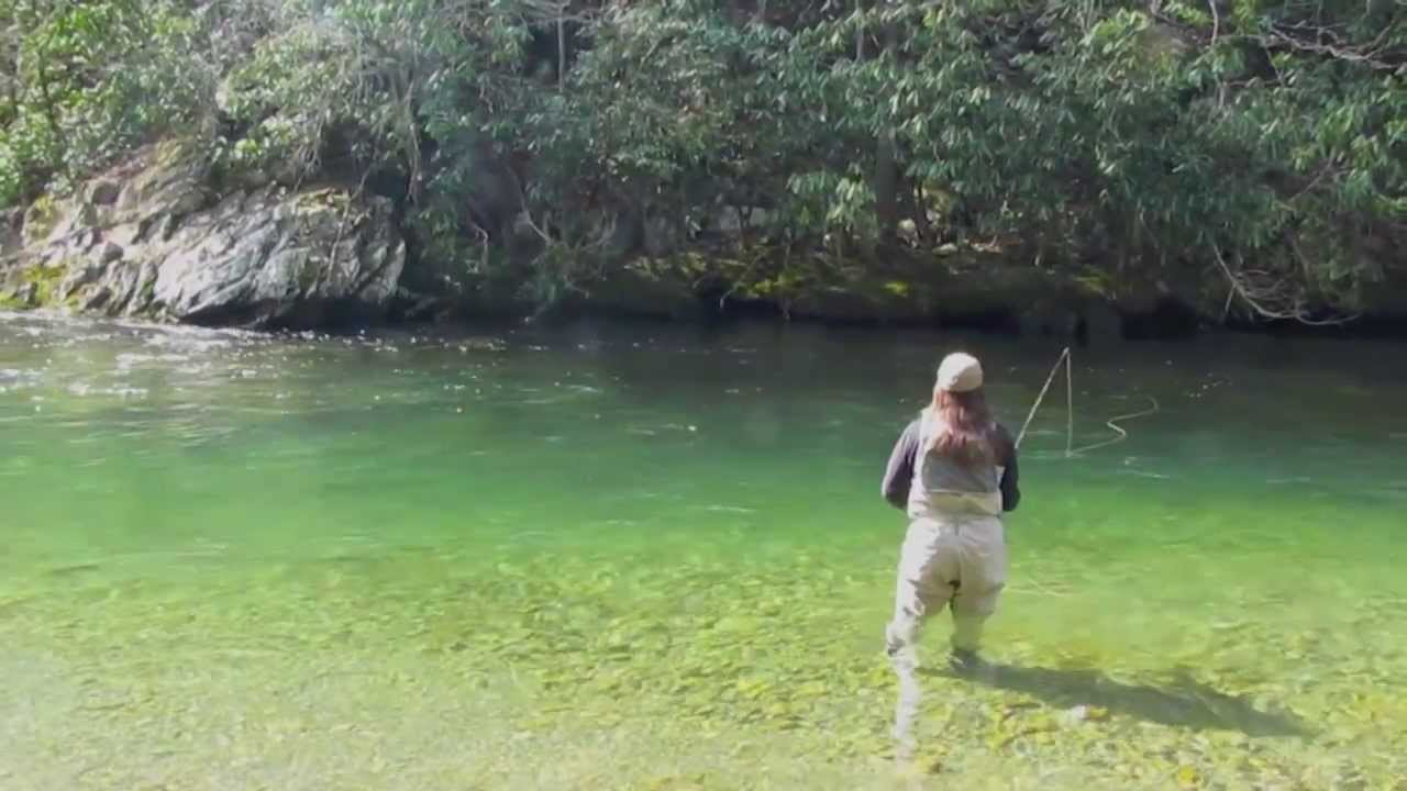 Fly fishing the blue quill hatch in the great smoky for Fishing in gatlinburg tn