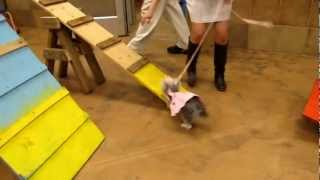 Agility Training At Petsmart (part1)