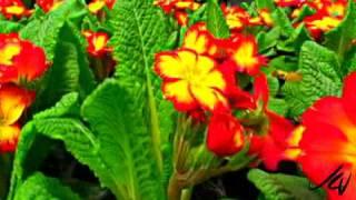 colorful spring landscape bedding plants