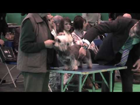 Dandie Dinmont Terriers at Crufts 2010 - Veteran Bitch