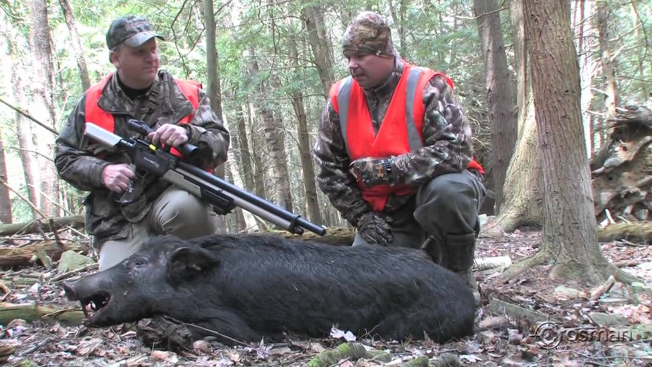 heli hog hunt with Wild Boar Kill With Pistol On Ikam on helibacon together with Our Helicopter additionally Helicopter Hog Hunt Slow Mo Kill Shots Video together with Bar t Crossbow Team Flying High After Epic Helicopter Feral Hog Hunt further Wild Boar.
