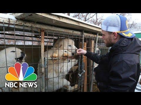 U.S. Olympian Gus Kenworthy 'heartbroken' By South Korean Dog Meat Farm | NBC News