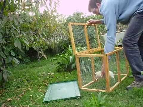 Corral para pastoreo con bandeja extraible para pollos for Para desarrollar un parque ajardinado