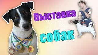 видео Подготовка собак к выставкам