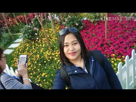 Hong kong flowers show 2018