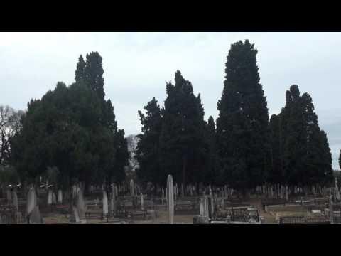 Long Form Video 4