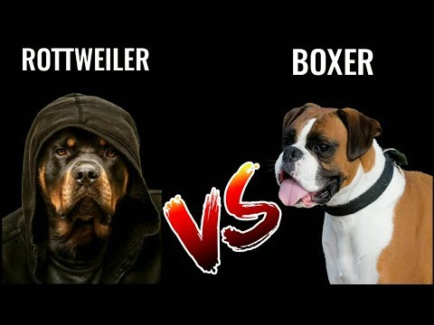 Rottweiler Vs Boxer | in Hindi | dog comparison | Dog Vs Dog | Rottweiler Vs Boxer
