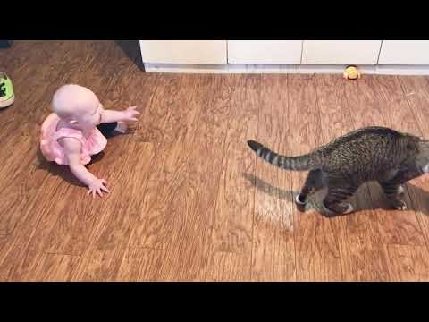 Baby and Cat Fun and Cute #2 - Funny Baby Video