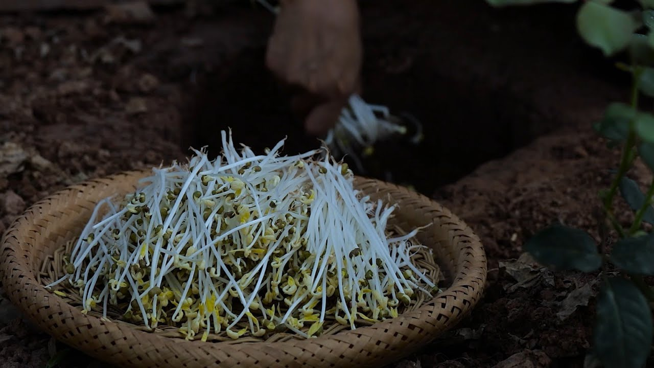 Long, tender and fresh: bean sprouts are nutritious and pollution-free.(又长又嫩又新鲜,这样种豆芽才能保证营养无公害)