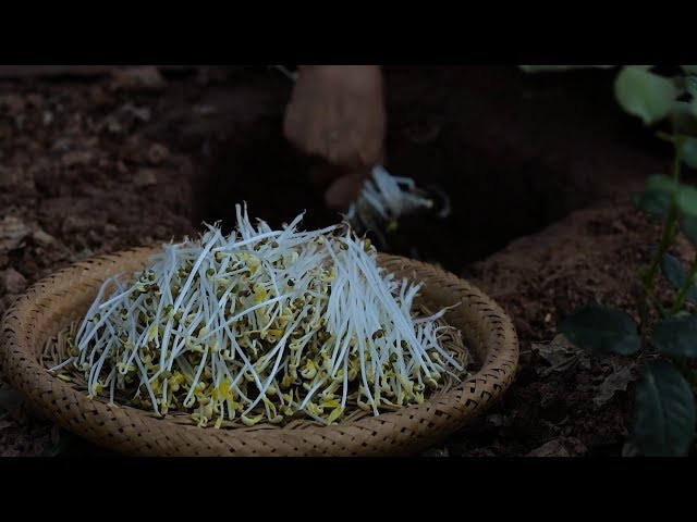 Long, tender and fresh: bean sprouts are nutritious and pollution-free.????????????????????????