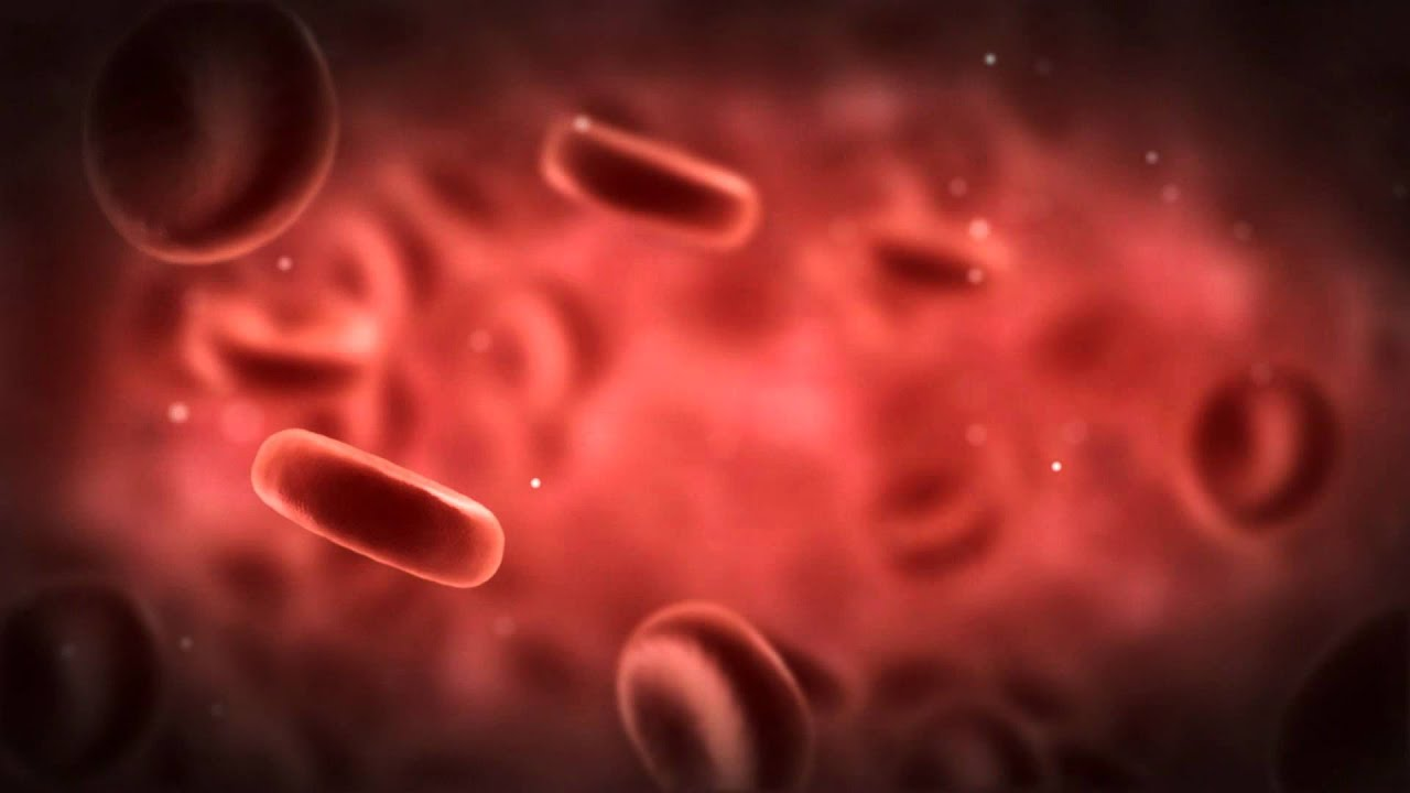 Red Blood Cells - YouTube