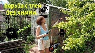 Борьба с тлей и другими вредителями растений в саду.