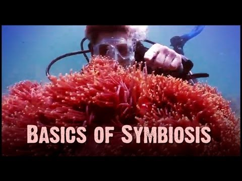 Symbiosis Mutualism Commensalism And Parasitism Youtube