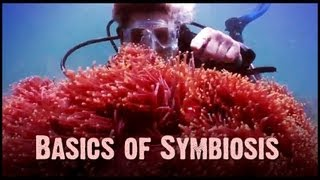 Symbiosis: Mutualism, Commensalism, and Parasitism