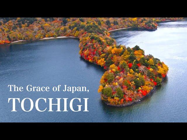 "The Plateau of Autumn Leaves "" The Grace of Japan, TOCHIGI """