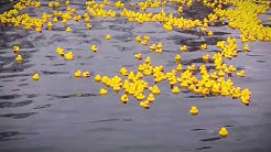 Ankanuitto/Rubber Duck Race of Valkeakoski 2018