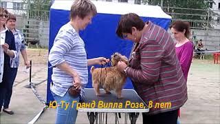 17 июня 2018 г., выставка  собак, г. Великий Новгород, норвичи