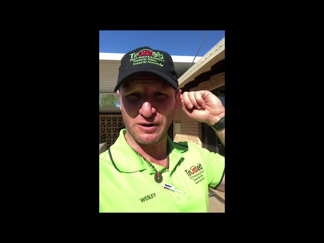 How to install a partial termite reticulation system using Term-X
