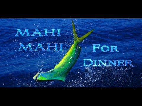 HOW TO FILLET AND COOK MAHI MAHI!!! Tasty Tuesday 30