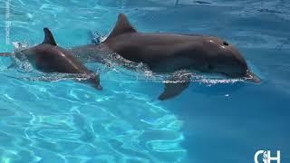 Gambar cover Nace delfín en el Delfinario Sonora