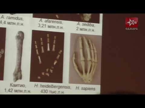 Эволюция человека  мифы и реальность  Станислав Дробышевский