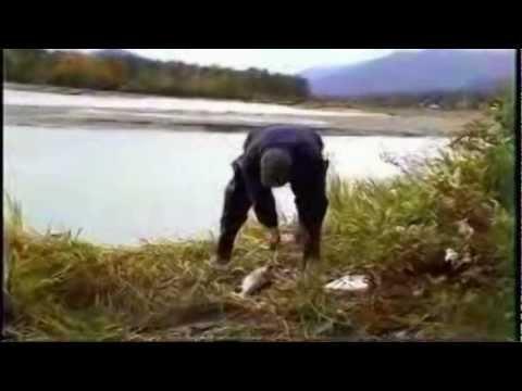 Alaska Haines Borequito 2006.mp4
