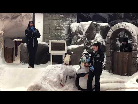 Ski Dubai Penguin Show 2019