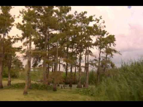 Louisiana Coastal Wetlands