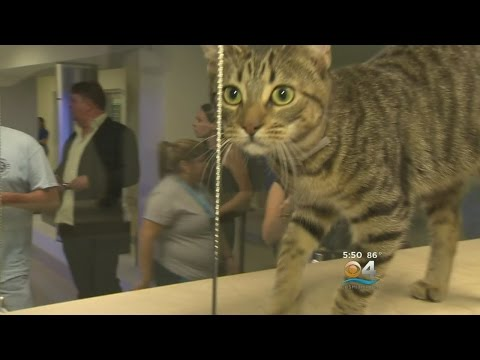 New Animal Shelter Opens Up In Miami-Dade County