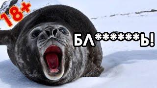 Тюлень матерится