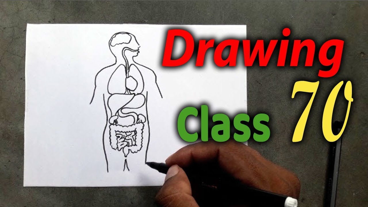 Drawing Class 70 How To Draw Human Body Organs Youtube