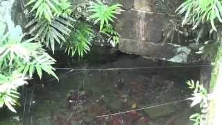 五島市 岩川湧水