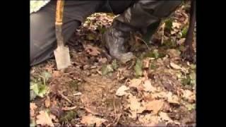 Traženje  tarufa - Zigante tartufi