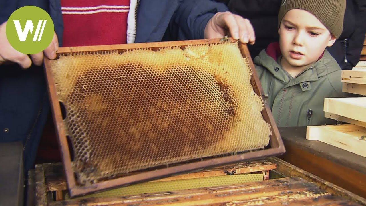 Bienen Im Winter Austausch Der Waben Youtube