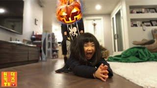 호박귀신과 투명망토의 대결! 할로윈 호박유령 잭오랜턴  크리스마스유령 Stalked By Pumpkins ghost l pumpkin legend of jack o' lantern