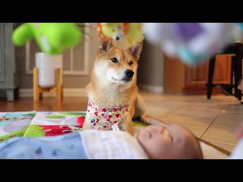Dog and Baby Mesmerized by Mobile Toy.