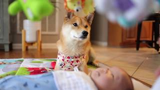 Dog and Baby Mesmerized by Mobile Toy
