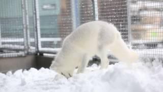Hudson meets snow!
