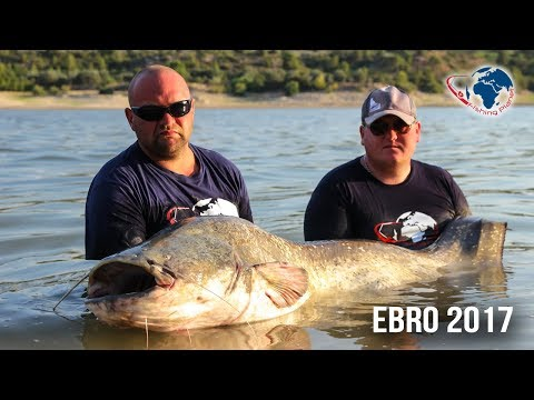 Wyjazd nad rzekę Ebro - Sumy i Sandacze | Polska Baza Wędkarska Fishing Planet | Wędkarstwo